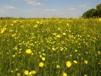 sárga virágok