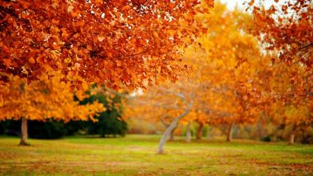 Itt az ősz, itt van újra … – Indul önismereti programunk